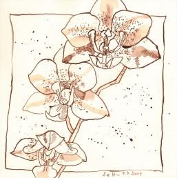 Orchidee - Zeichnung von Susanne Haun
