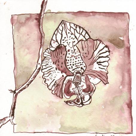Orchideeblüte - Zeichnung von Susanne Haun