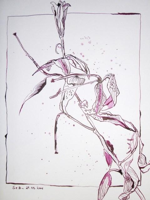 Verblühte Lilie - Zeichnung von Susanne Haun