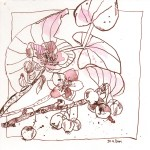 Christrosenstrauß - Zeichnung von Susanne Haun - 20 x 20 cm - Tusche auf Bütten