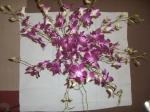 Orchideenstrauß 2 - Foto von Susanne Haun