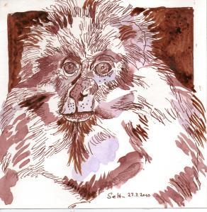 Berberaffe - Zeichnung von Susanne Haun - 20 x 20 cm - Tusche auf Bütten