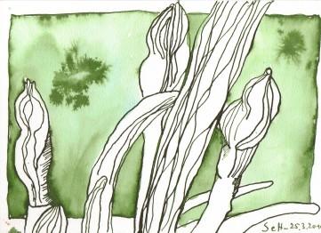 Geschlossene Narzissen - Zeichnung von Susanne Haun - 15 x 21 cm - Magnani Pescia Bütten