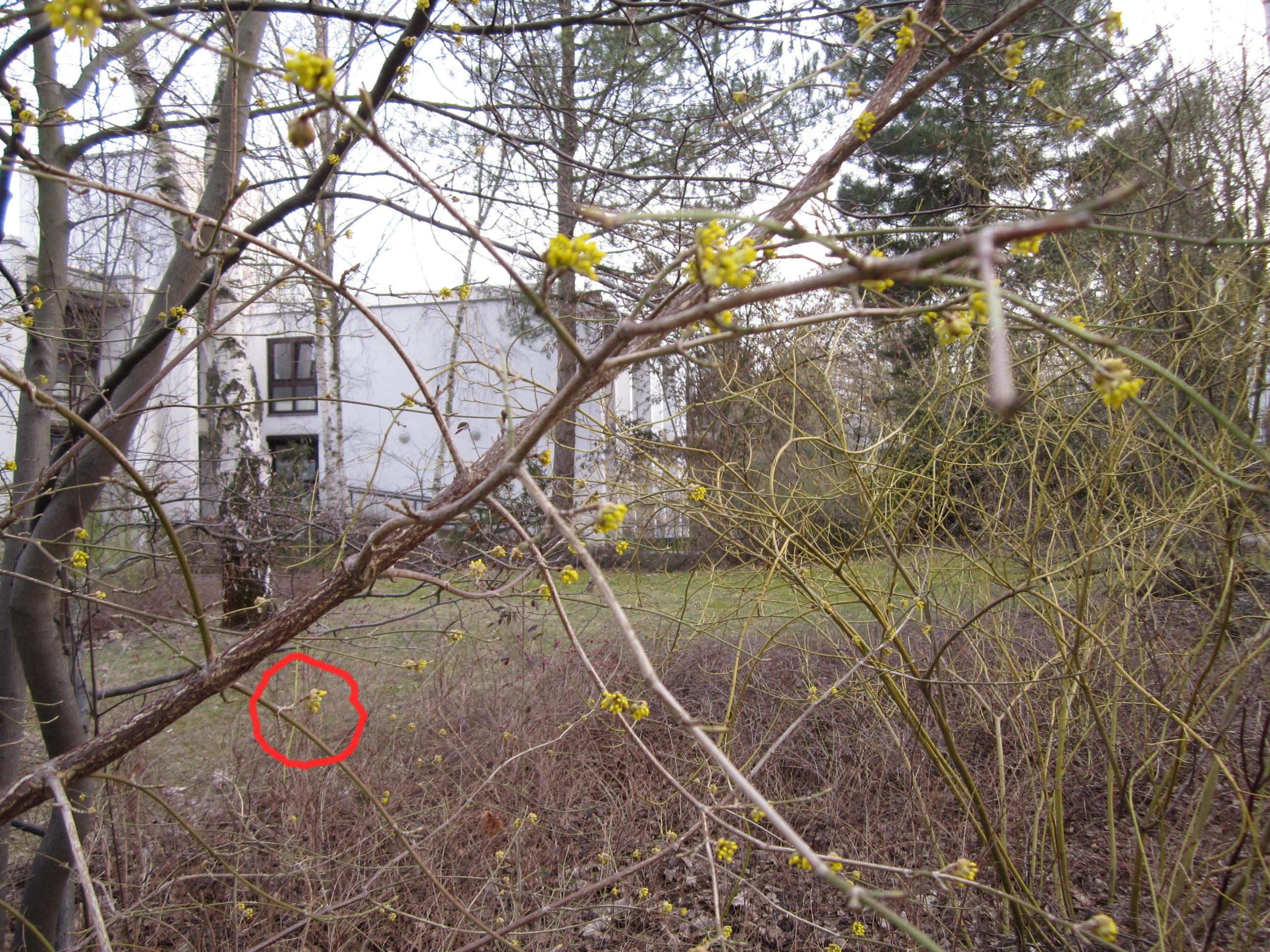 strauch mit gelben bl ten foto von susanne haun. Black Bedroom Furniture Sets. Home Design Ideas