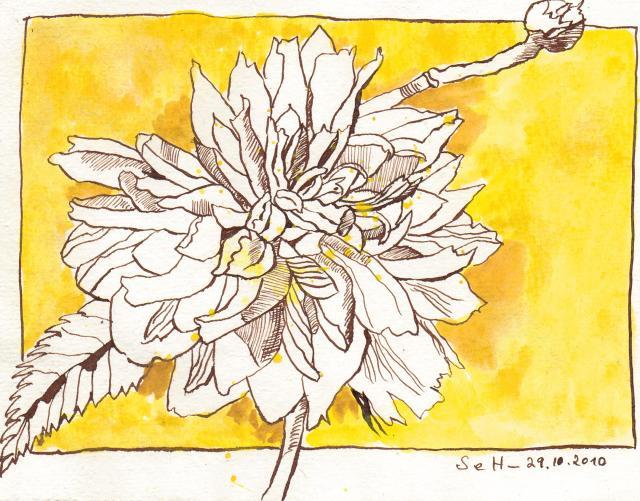 Gelbe Blüte - Zeichnung von Susanne Haun - 15 x 20 cm - Tusche auf Bütten