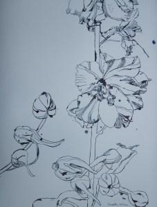 Rittersporn - Zeichnung von Susanne Haun - 70 x 50 cm - Tusche auf Hahnemühle Bütten