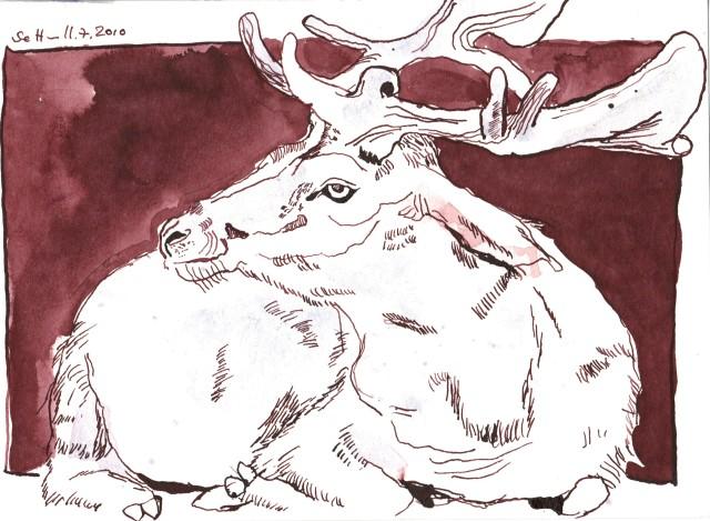 Hirsch - Zeichnung von Susanne Haun - 17 x 24 cm - Tusche auf Hahnemühle Torchon