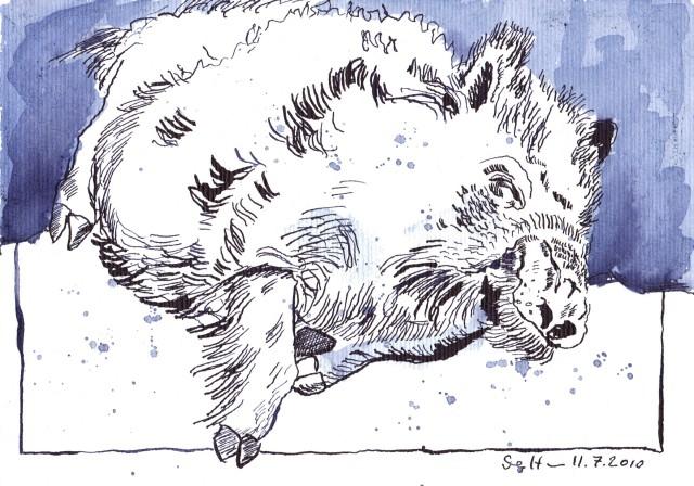 Wildschwein - Zeichnung von Susanne Haun - 17 x 24 cm - Tusche auf Hahnemühle Britannia