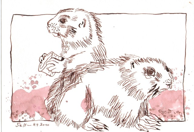 Erdhörnchen - Zeichnung von Susanne Haun - 15 x 20 cm - Tusche auf Bütten