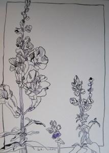 Löwenmäulchen - Zeichnung von Susanne Haun - 34 x 22 cm - Tusche auf Bütten