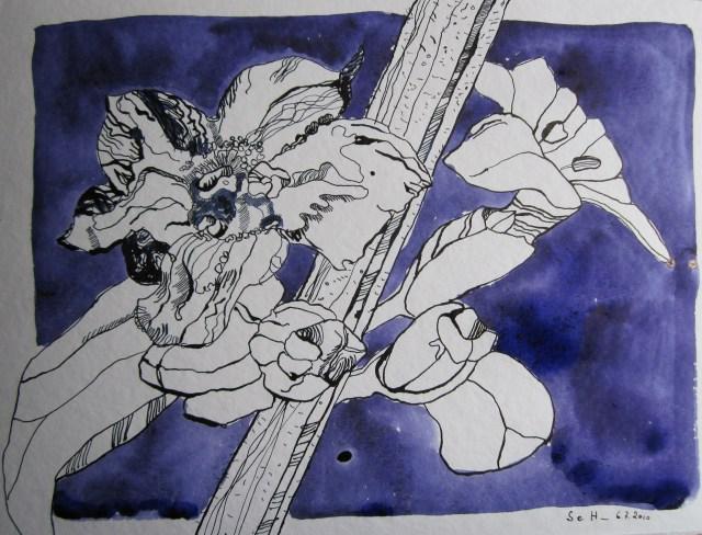 Lavendelblüte - Zeichnung von Susanne Haun - 36 x 48 cm - Tusche auf Bütten