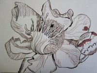 Entstehung Orchidee - Zeichnung von Susanne Haun - 17 x 22 cm - Tusche auf Hahnemühle Selection Blatt 1