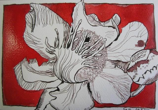 Orchidee - Zeichnung von Susanne Haun - 17 x 22 cm - Tusche und Aquarell auf Hahnemühle Selection Blatt 1