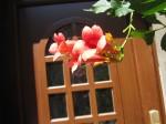 Trompetenblume in Wittenberg - Foto von Susanne Haun