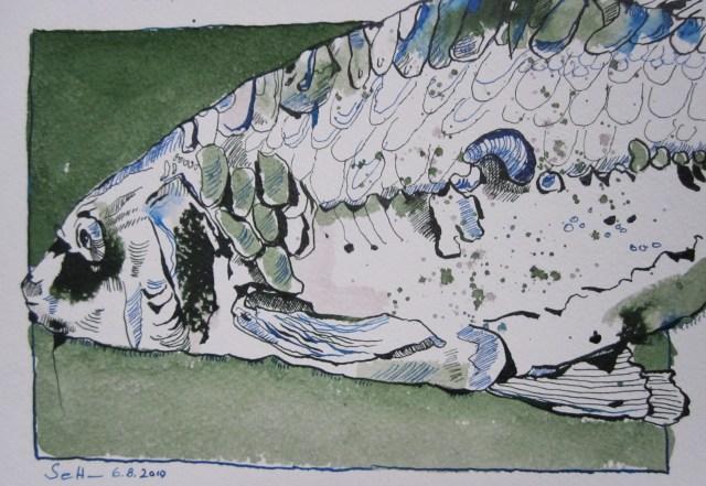 Fisch - Zeichnung von Susanne Haun - 17 x 22 cm - Tusche auf Bütten