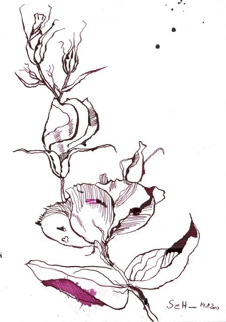 Pinkfarbende Blume - Zeichnung von Susanne Haun - 22 x 17 cm - Tusche auf Hahnemühle Selection Bütten Papier
