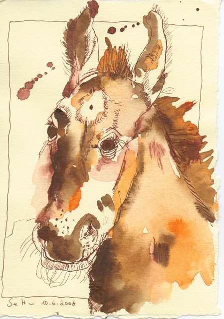 Esel - Zeichnung von Susanne Haun - 20 x 15 cm - Tusche und Aquarell auf Silberburg Bütten - verkauft