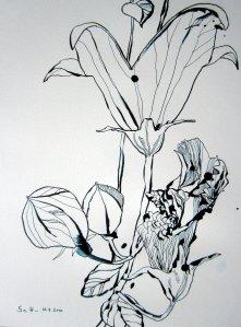 Ballonblume - Zeichnung von Susanne Haun - 40 x 30 cm - Tusche auf Bütten