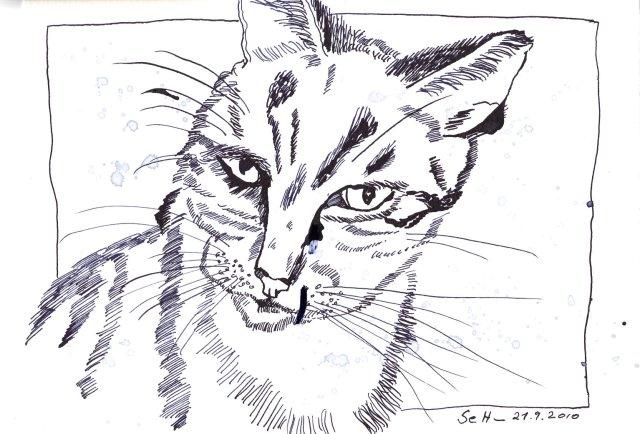 Katze - Zeichnung von Susanne Haun - 18 x 22 cm - Tusche auf Hahnemühle Selektion