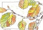 Laub - Zeichnung von Susanne Haun - 17 x 22 cm - Tusche auf Bütten