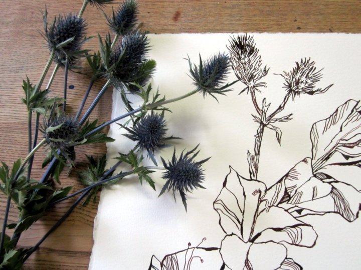 Disteln - Zeichnung / Foto von Susanne Haun