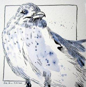 Möwe - Zeichnung von Susanne Haun - 20 x 20 cm - Tusche auf Bütten