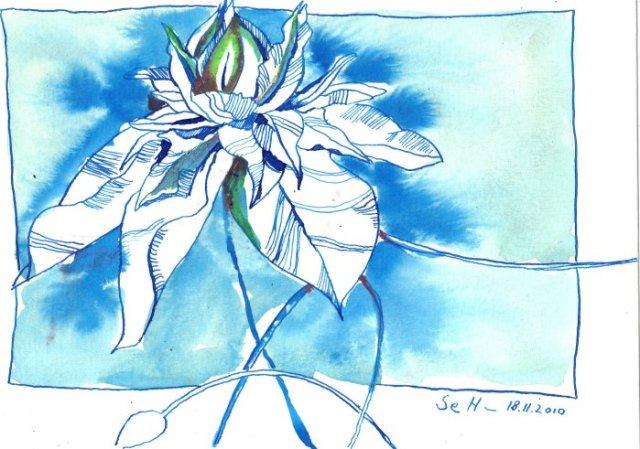 Passionsblume 2 - Zeichnung von Susanne Haun - Tusche und BUNTSTIFTE auf Bütten - 17 x 22 cm