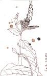 Blaue Blume von Gerda - Zeichnung von Susanne Haun - 15 x 10 cm - Tusche auf Bütten