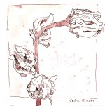 Vertrockneter Hibiskus - Version 1 - Zeichnung von Susanne Haun - Tusche auf Bütten