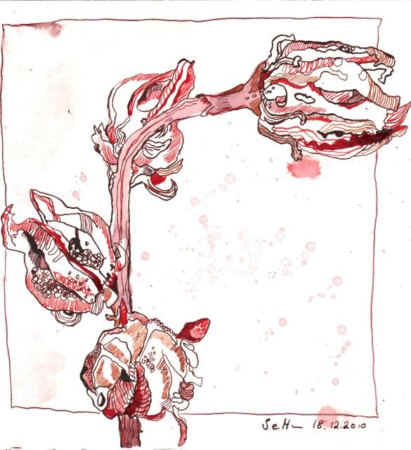 Vertrockneter Hibiskus - Zeichnung von Susanne Haun - 20 x 20 cm - Tusche auf Bütten