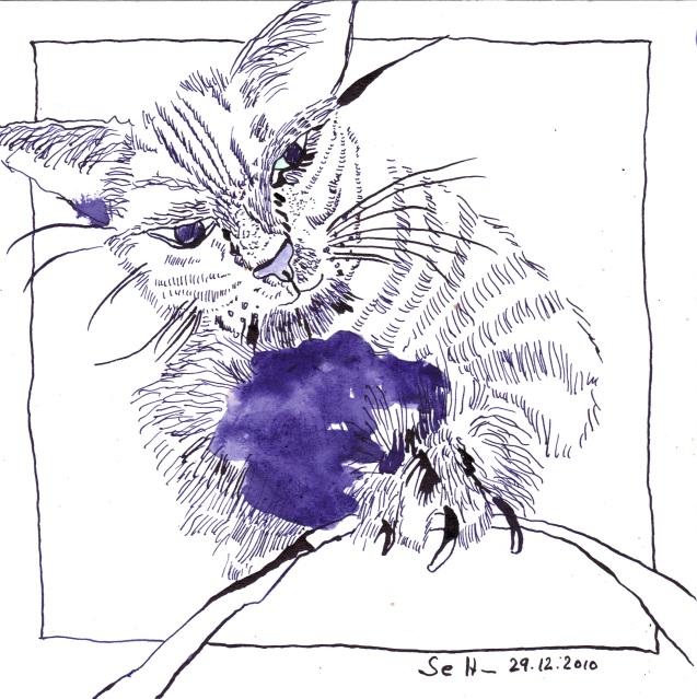 Süße ( Katze ) - Zeichnung von Susanne Haun - 20 x 20 cm - Tusche auf Bütten