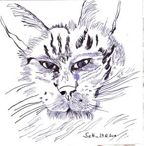 Süßer ( Kater ) - Zeichnung von Susanne Haun - 20 x 20 cm - Tusche auf Bütten