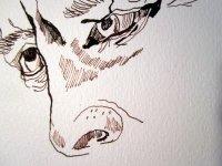 """Der Blick des Mannes - Ausschnitt Zeichnung """"Athena"""" von Susanne Haun"""