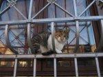 Schade, dass deine Zeit da war, die Katze in Haldensleben zu skizzieren - Foto von Susanne Haun
