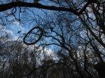 In Buckau wachsen Fahrradreifen an den Bäumen - Foto von Susanne Haun