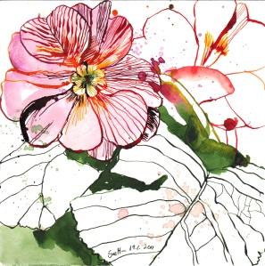 Primel - Zeichnung von Susanne Haun - 20 x 20 cm - Tusche auf Bütten