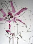 Entstehung Hyazinthenblüten von Susanne Haun