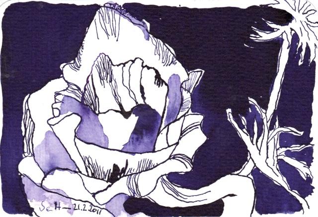 Violette Anemone - Tusche auf Bütten - 10 x 15 cm - Zeichnung von Susanne Haun