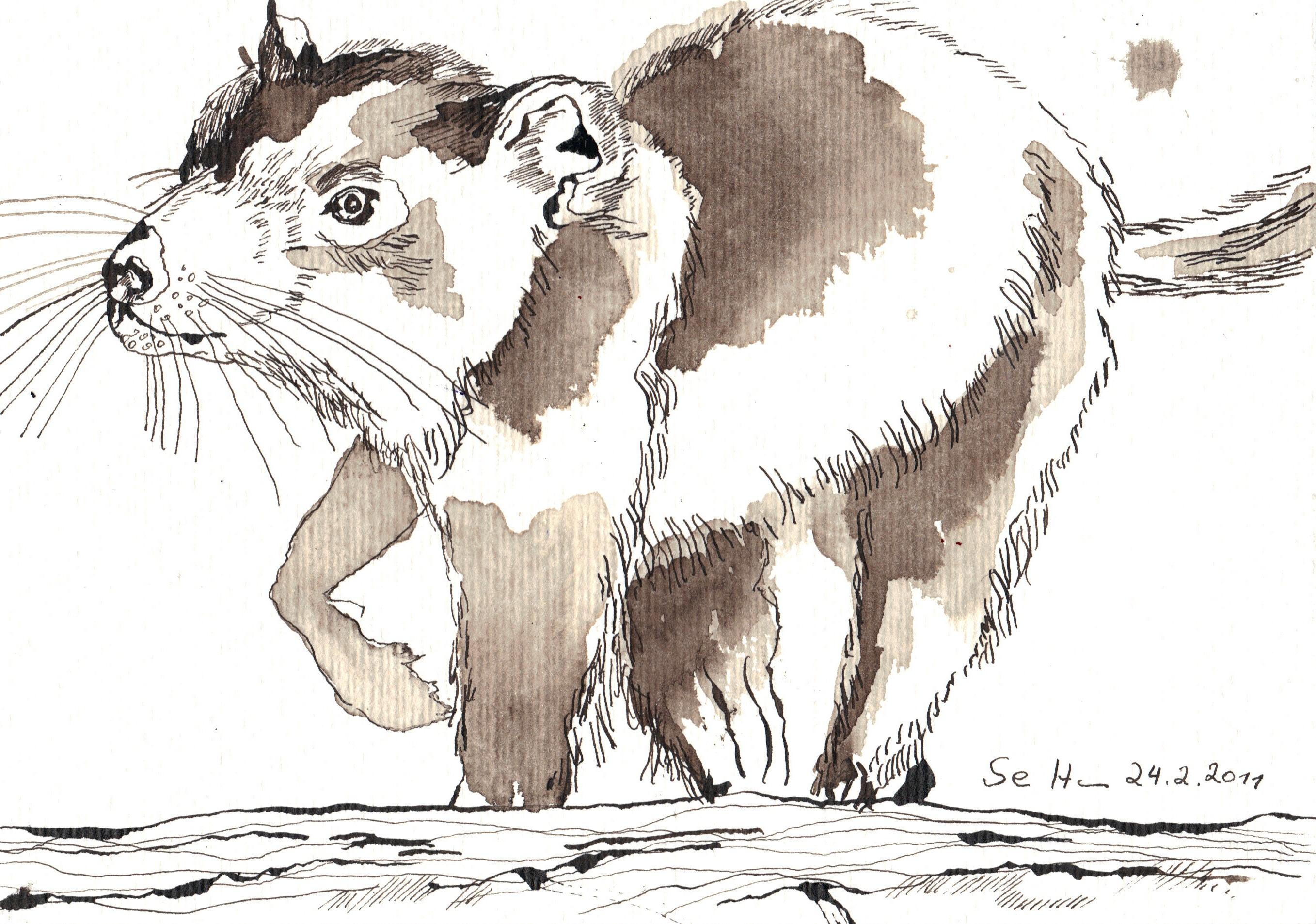 Tasmanischer Teufel | Susanne Haun