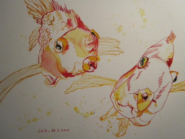 Goldene goldfische zeichnung von susanne haun susanne haun for Goldfische im aquarium