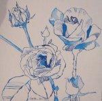 Rosen - Zeichnung von Susanne Haun - 20 x 20 cm - Tusche auf Bütten