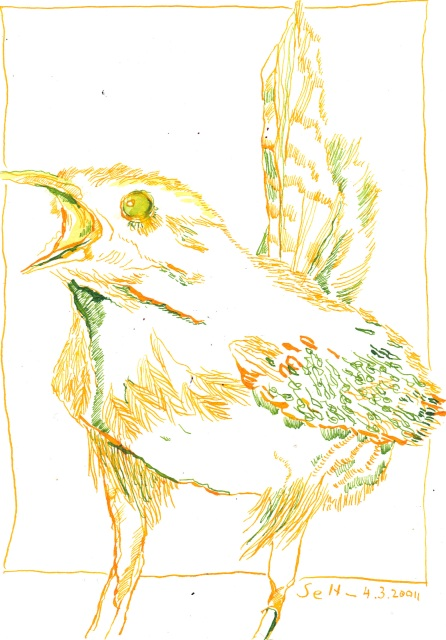 Gelb - Grüner - Zaunkönig - Zeichnung von Susanne Haun - 22 x 17 cm - Tusche auf Bütten