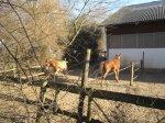Die Pferde sind nicht zu bändigen - Foto von Susanne Haun