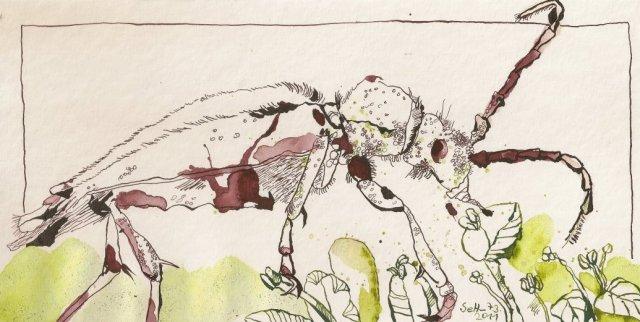 Käfer - Zeichnung von Susanne Haun - 15 x 30 cm - Tusche auf Bütten