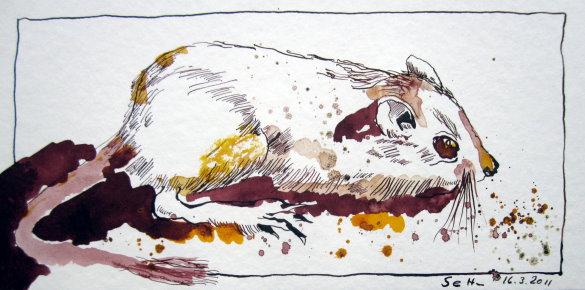 Fred die Maus - Zeichnung von Susanne Haun - 15 x 30 cm - Tusche auf Bütten
