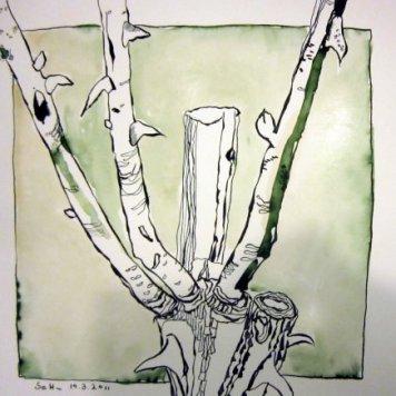 Rosenstöcke grün - Zeichnung von Susanne Haun - 25 x 25 cm - Tusche auf Bütten