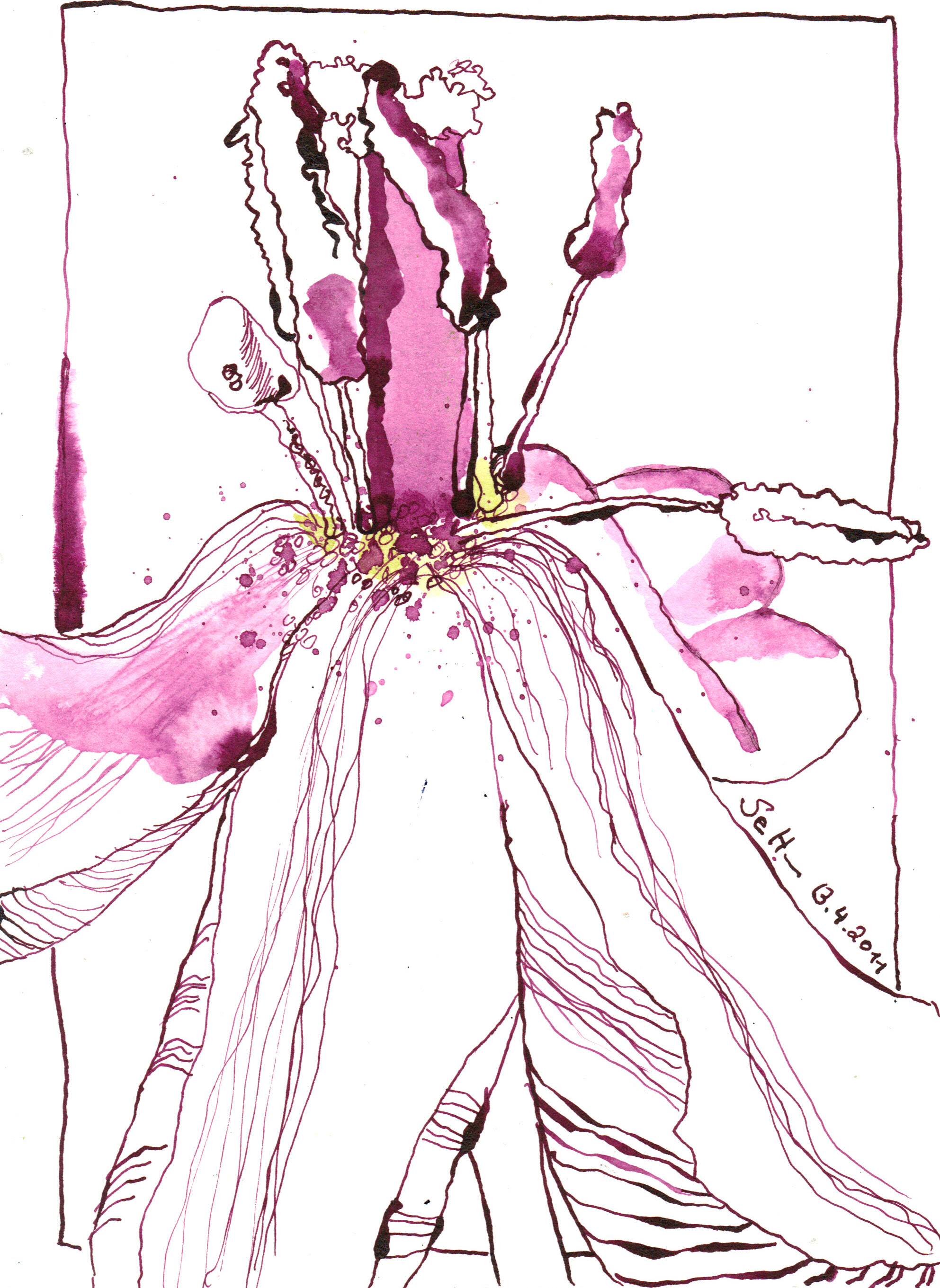 rosa tulpen und die tr ume der oda k zeichnungen von. Black Bedroom Furniture Sets. Home Design Ideas
