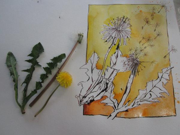 Entstehung Pusteblume - Zeichnung von Susanne Haun