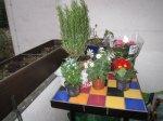 Ich mag es, wenn die Pflanzen noch in den Töpfen auf meinem Tisch stehen - Foto von Susanne Haun