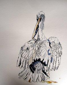 Entstehung Blogparaden Pelikane - Zeichnung von Susanne Haun